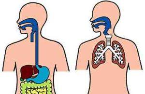 気管と食道