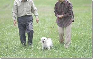 高齢夫婦の犬の散歩