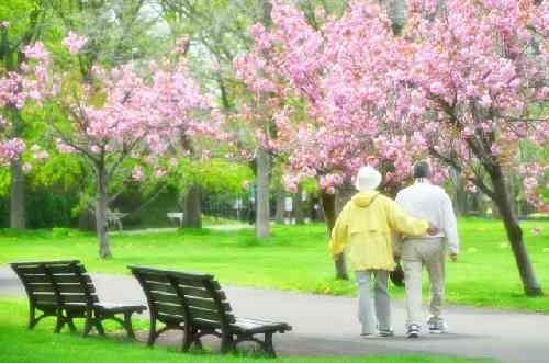 高齢者の散歩風景