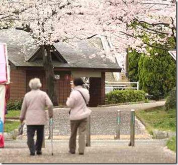 おばあちゃんと娘が桜の木の下で