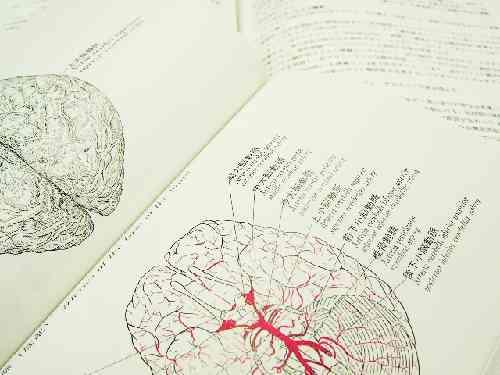 脳の名称を記述した図